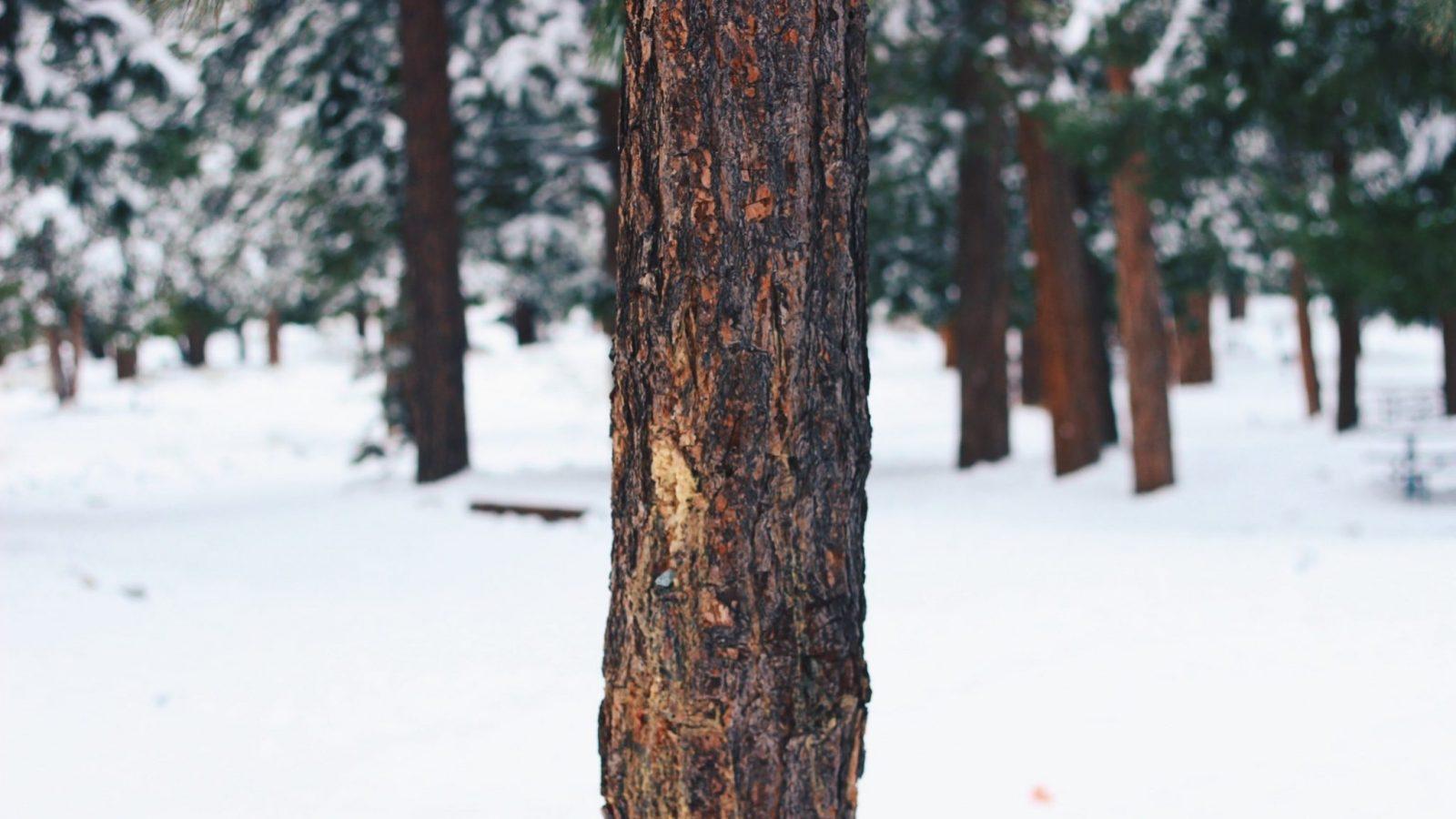 5 activités nature pour déconnecter des écrans en hiver