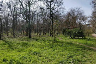 Bois de Boulogne - Paris 16e