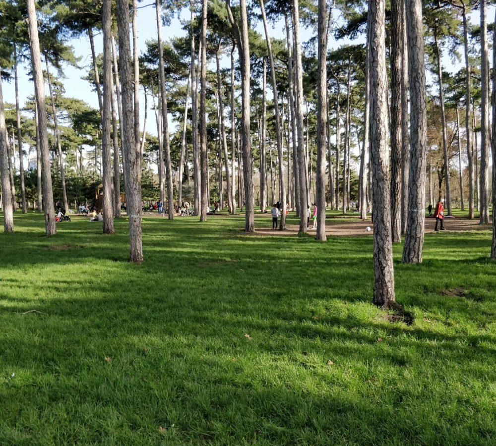 Bois de Boulogne - Neuilly